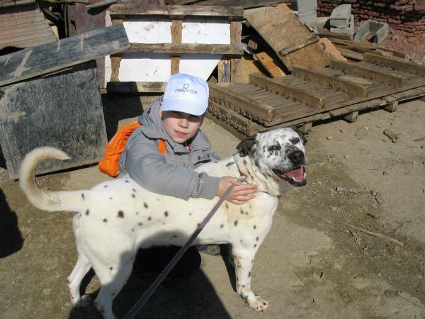 Den na dobrovolchestvoto 2015_Animal Rescue Sofia